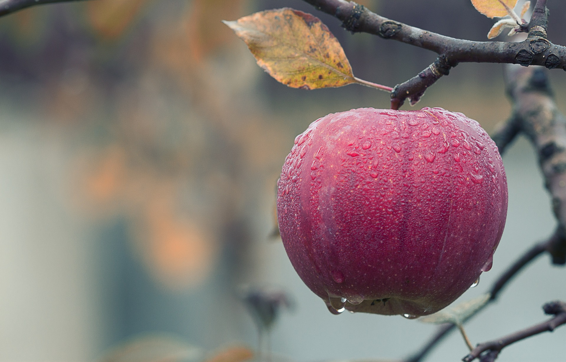 benefits of apple-mishry