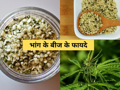 benefits of hemp seeds in hindi