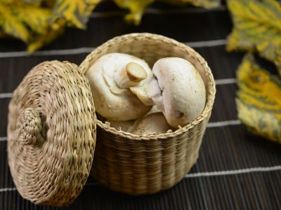 mushroom-mishry