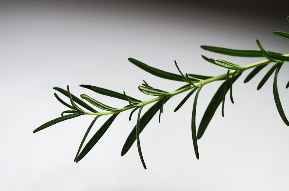 Benefits Of Rosemary Oil